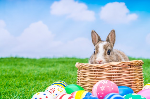 Bunny in a straw basket with different coloured eggs