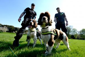 security dogs, police