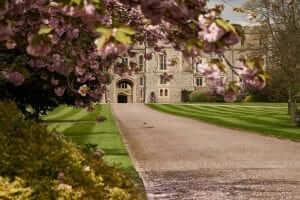 Windsor castle entrance through blossom tree