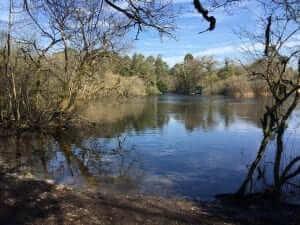ashford lake
